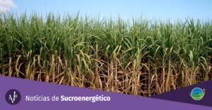 plano de biocombustíveis RenovaBio