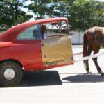 Carros brasileiros