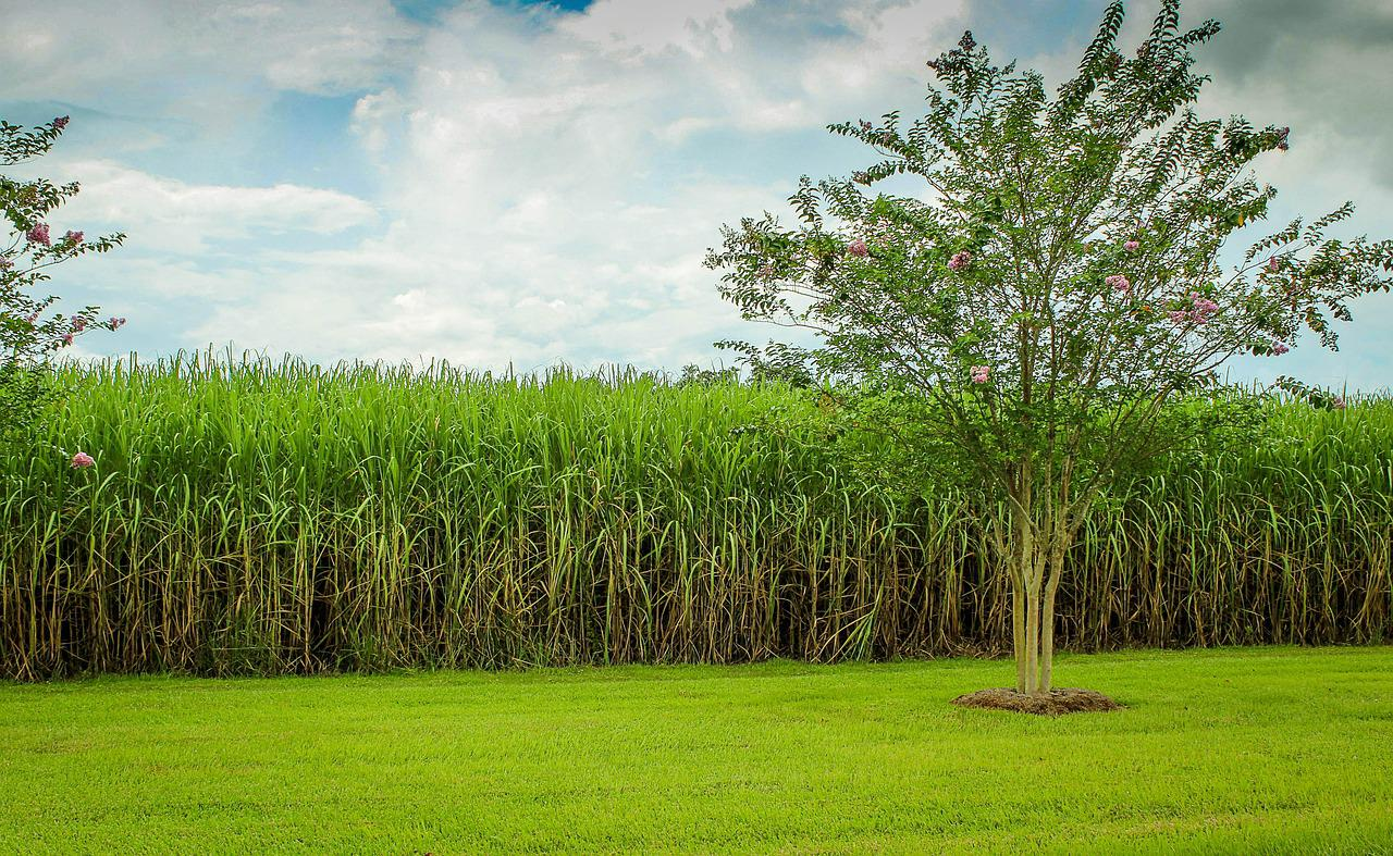 Venda direta do etanol