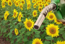 diesel B15