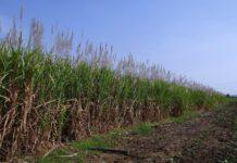 Venda de etanol