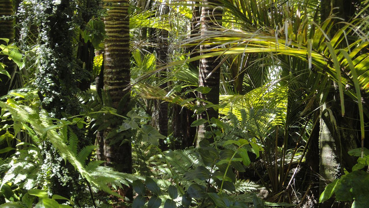 Polêmica ambiental na Amazônia